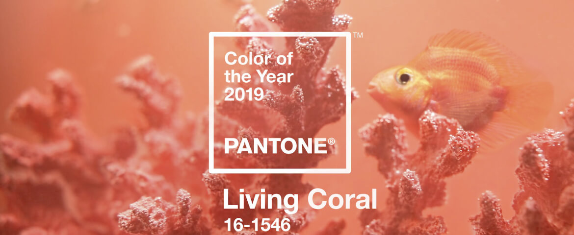 Coral 2019